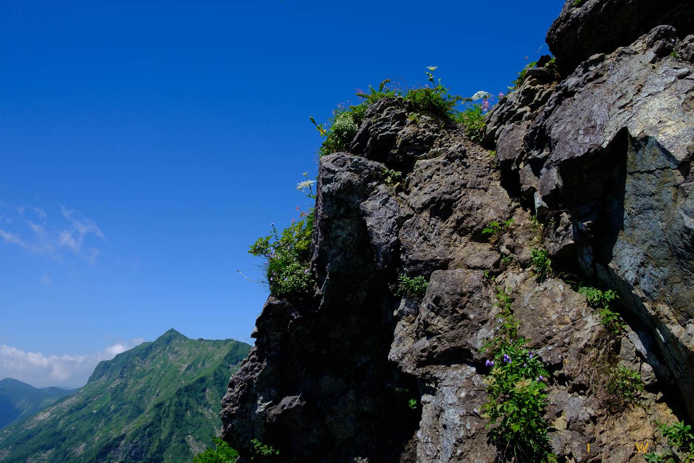 岩に咲く高山植物