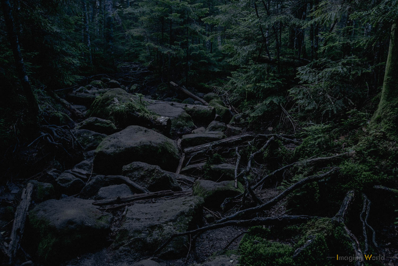 荒廃的なイメージに仕上げた森