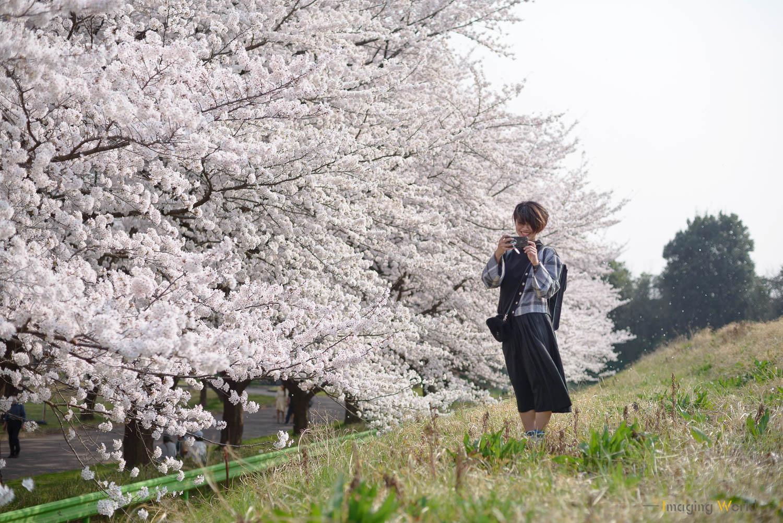 桜は最初っから色構成が決まってる