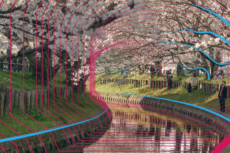 桜並木に見られる類似構造